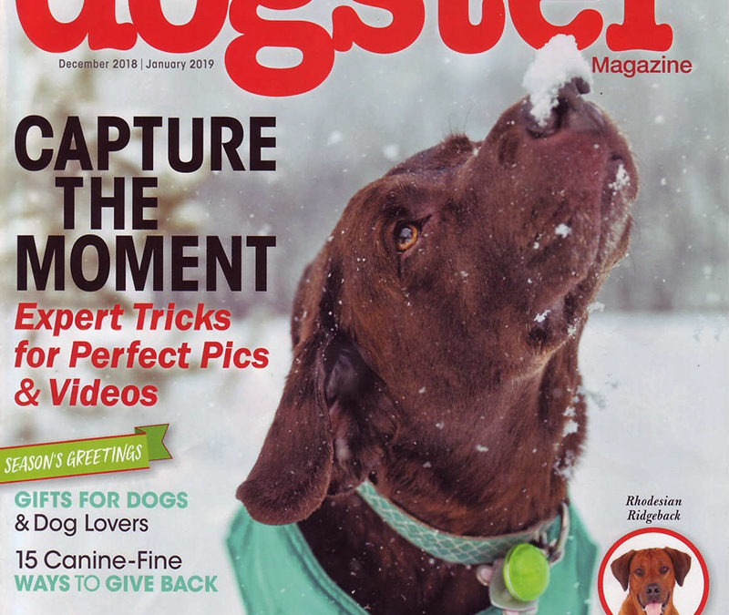 As Seen In Dogster Magazine: 2018 Holiday Must Haves