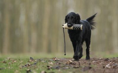 5 Dog Training Basics Every Dog Should Know