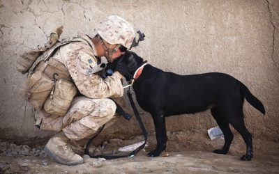 How Service Dogs Help the Military